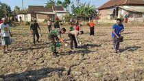 TNI dan Polisi di Lamongan Kompak Bantu Petani Basmi Tikus