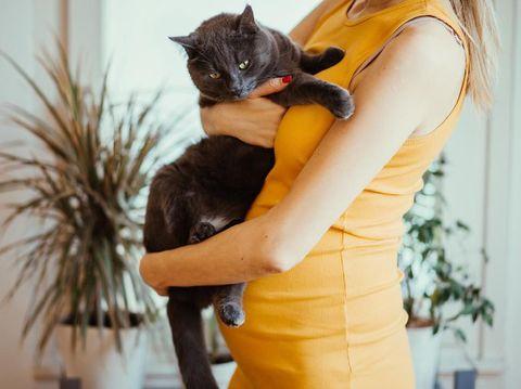 Pelihara Kucing Saat Hamil, Pasti Kena Tokso?