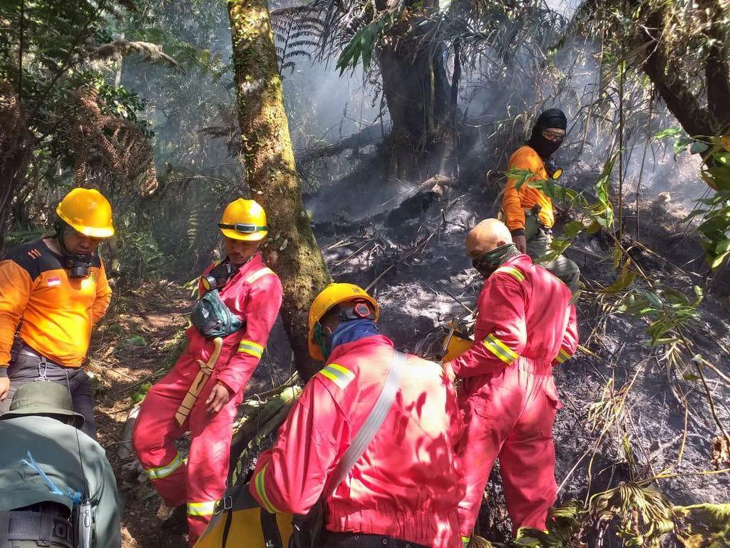 Api Melalap Lahan Hutan di Kaki Gunung Tangkuban Perahu