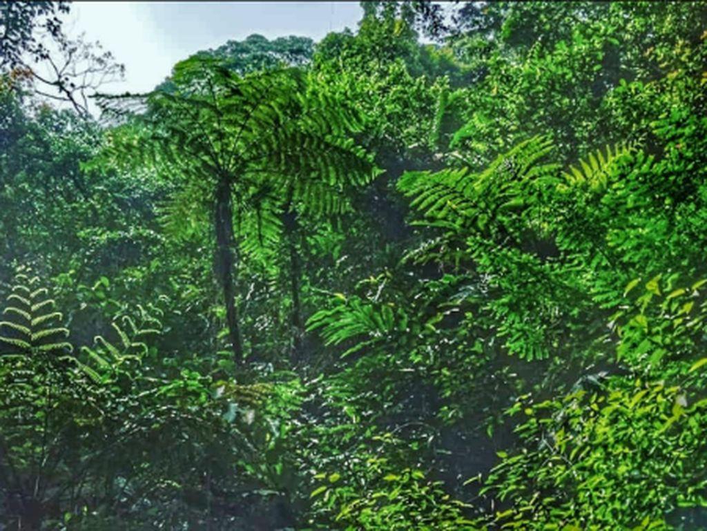 Hutan hujan gunung salak