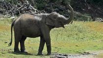 Pemkab Pidie Bakal Pasang Pagar Listrik Cegah Konflik Gajah-Warga