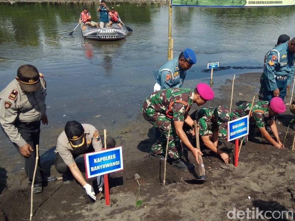 7 Ribu Bibit Mangrove Ditanam di Pantai Pulau Santen Peringati HUT TNI