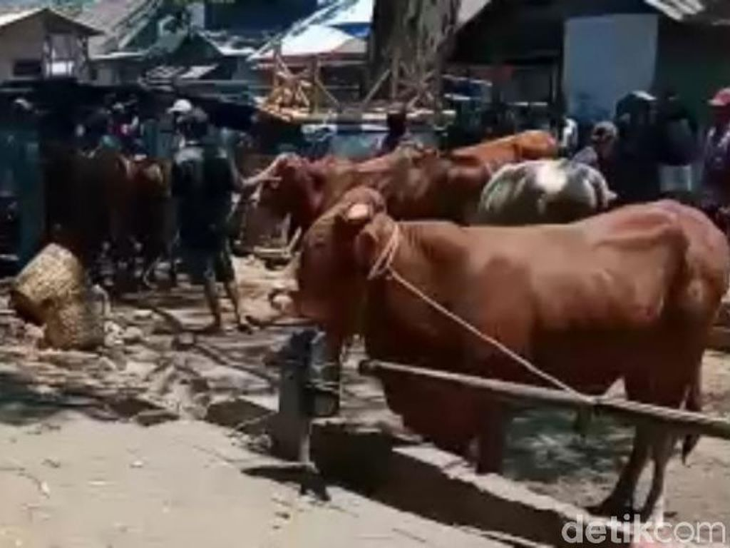 Pasokan Langka, Pedagang Daging Sapi Tuntut Pemerintah Turun Tangan