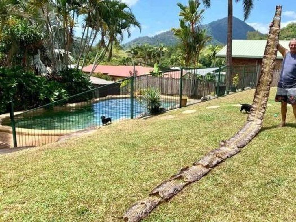 Warga Australia Temukan Kulit Ular Sanca Batik 7 Meter di Lingkungan Rumahnya