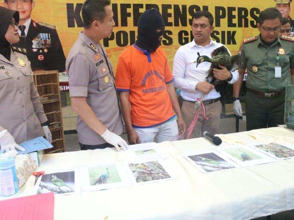 Polisi Gresik Bongkar Praktik Jual Beli Satwa Dilindungi