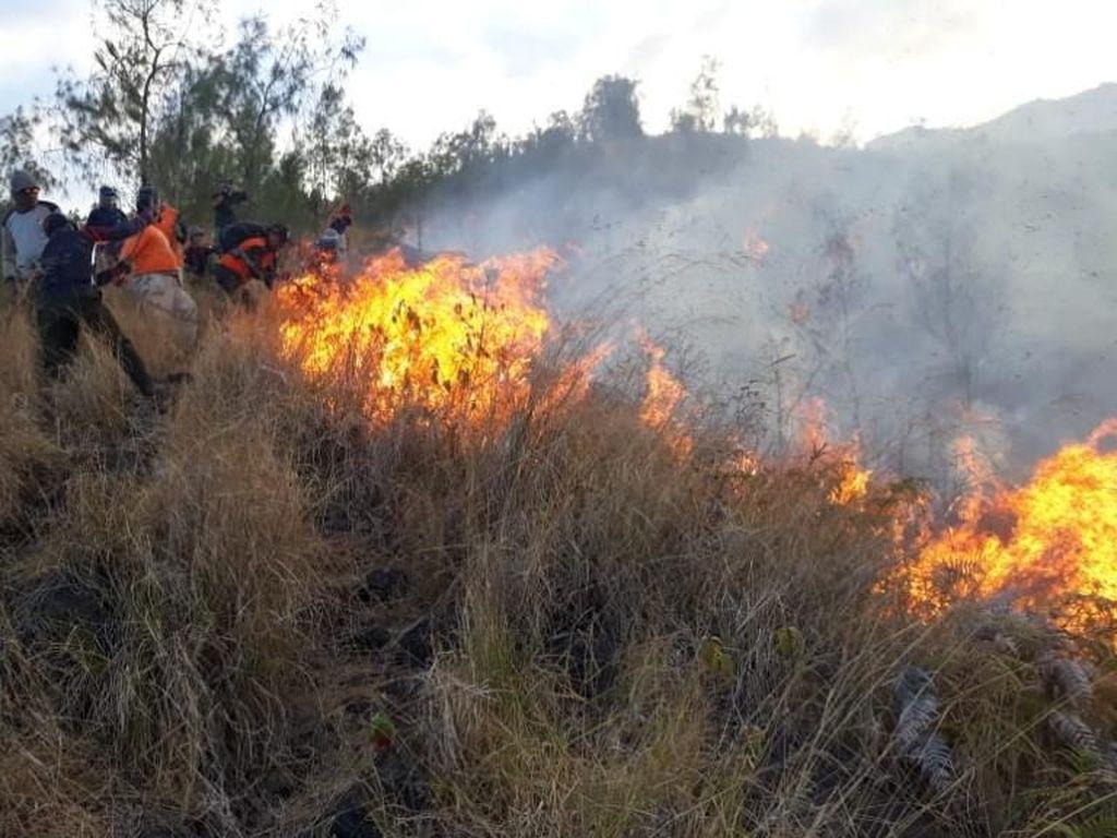 Gunung Arjuno Terbakar Lagi, Api Berkobar di Tebing Curam 1.600 Mdpl