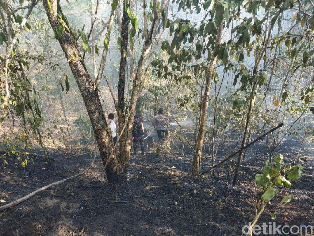 Antisipasi Karhutla, Petugas Taman Nasional Tambora Siaga 1