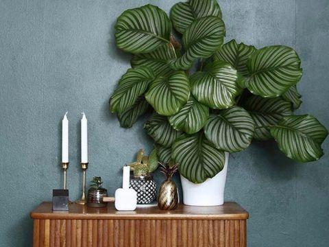 5 Tips Menata Tanaman Hias untuk Mempercantik Rumah Minimalis