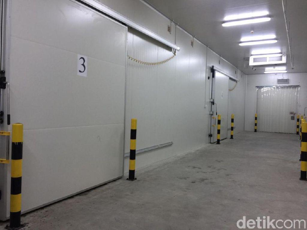 Cold Storage di Mimika Rampung, 200 Ton Ikan Siap Ditampung