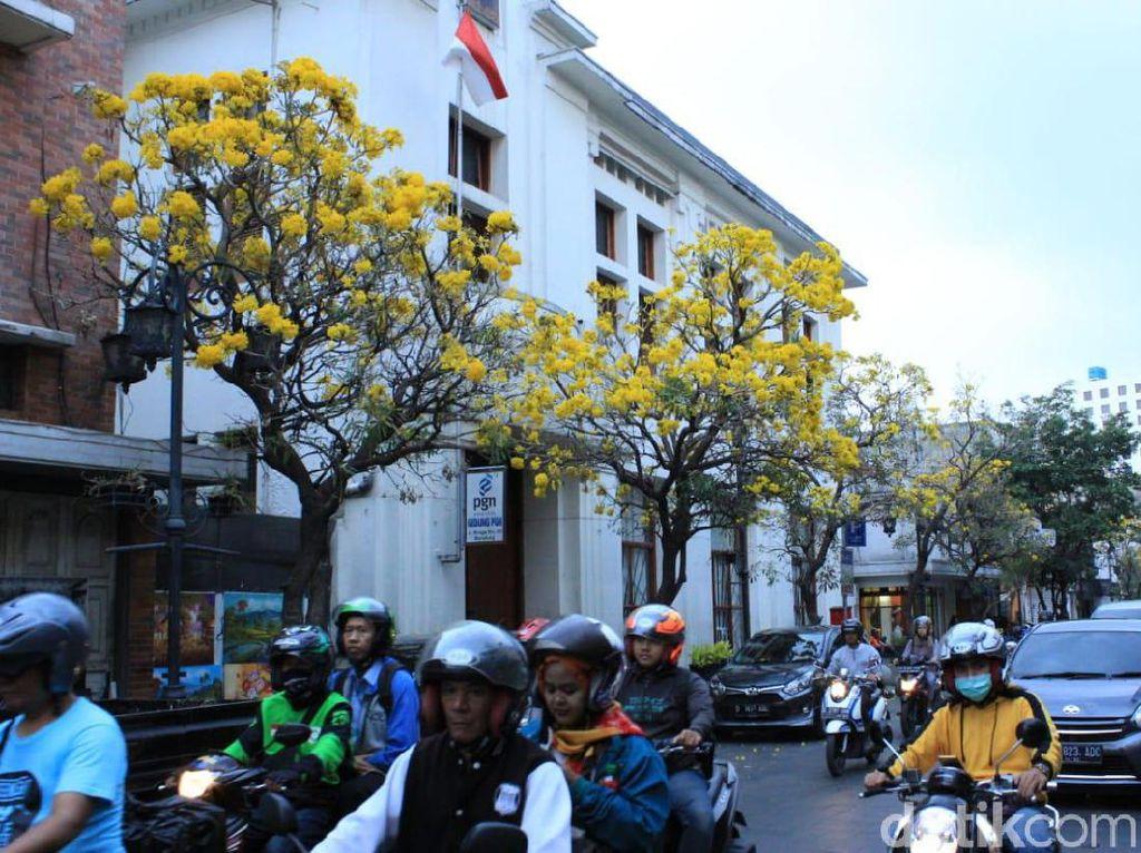 Bunga Tabebuya Makin Bikin Jalan Braga Serasa Luar Negeri