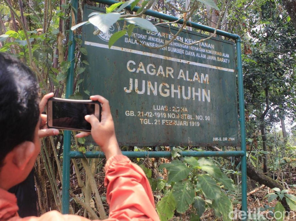 Jejak Kina di Indonesia, Tanaman yang Disebut Ridwan Kamil Obat Corona