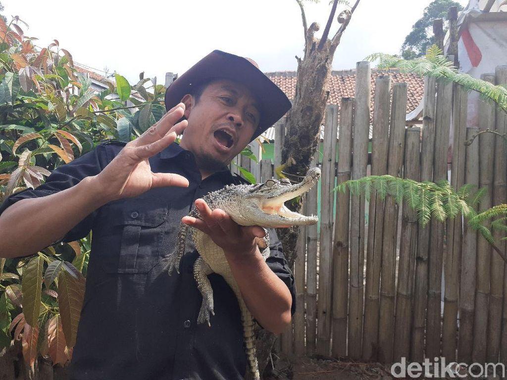 Presenter Steve Ewon Banting Setir Ikut Pilkades di Bandung Barat