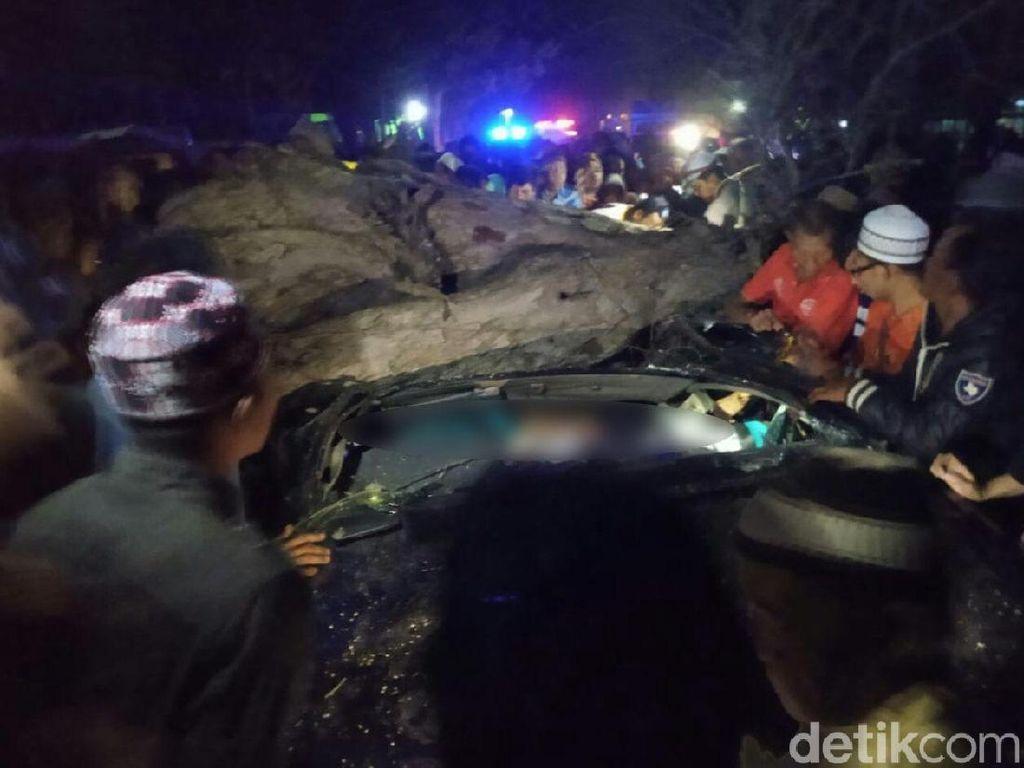4 Orang di Situbondo Tewas Tertimpa Pohon, Ini Upaya Kepolisian