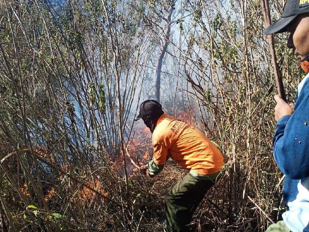 Hutan dan Semak di Lereng Gunung Welirang Terbakar