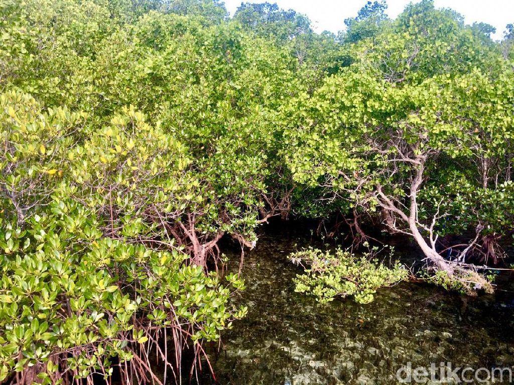 Cegah Kerusakan Pantai, 15 Ribu Mangrove Ditanam di Teluk Kendari