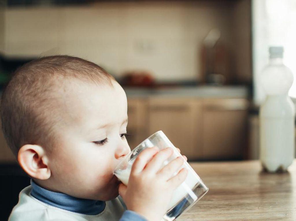 Peranan Probiotik dalam Pencegahan Alergi pada Anak