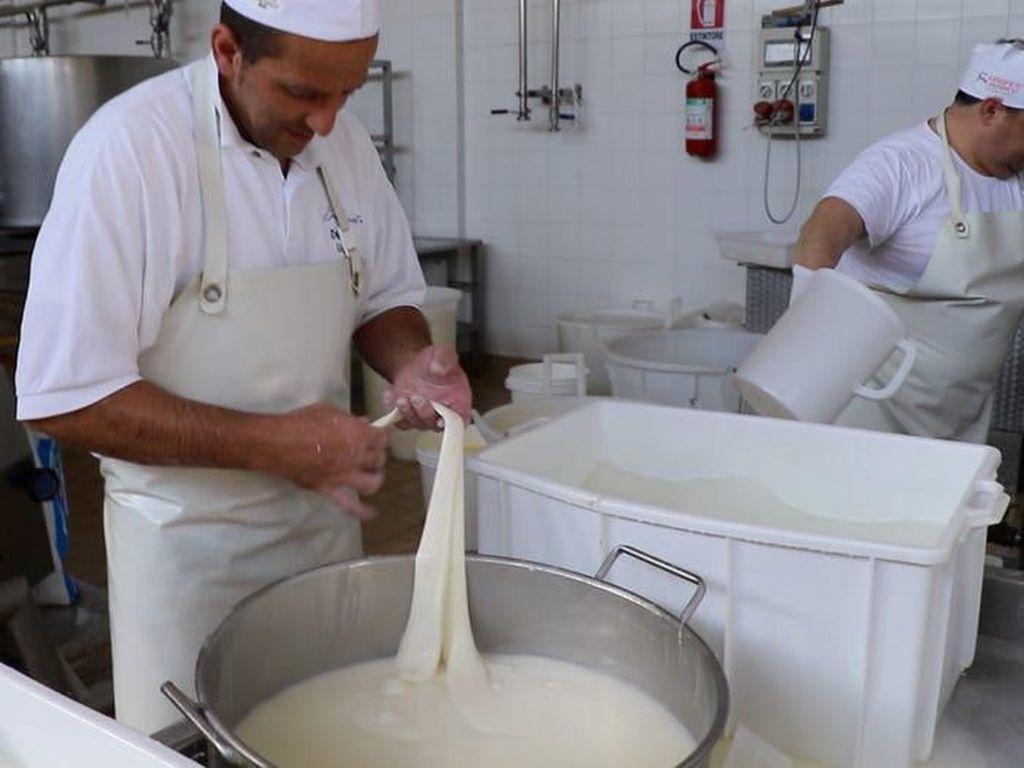Yuk, Intip Proses Pembuatan Keju Mozzarella Italia yang Autentik!