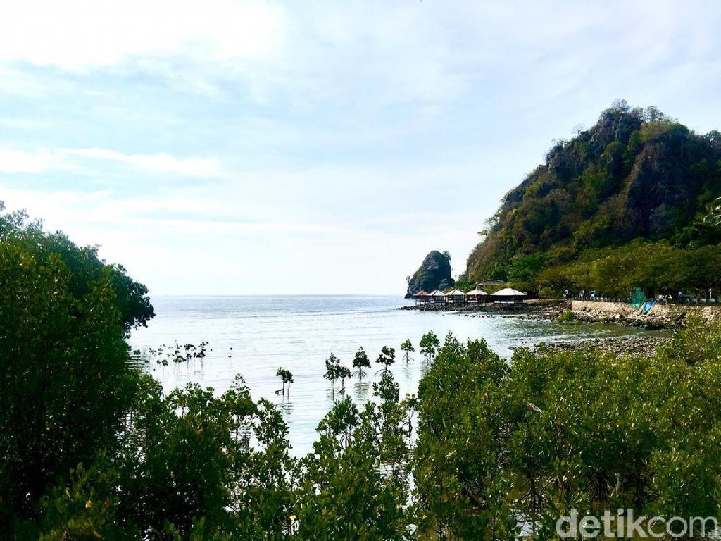 Foto: Rewataa, Hutan Mangrove Kaya Pesona di Sulawesi Barat