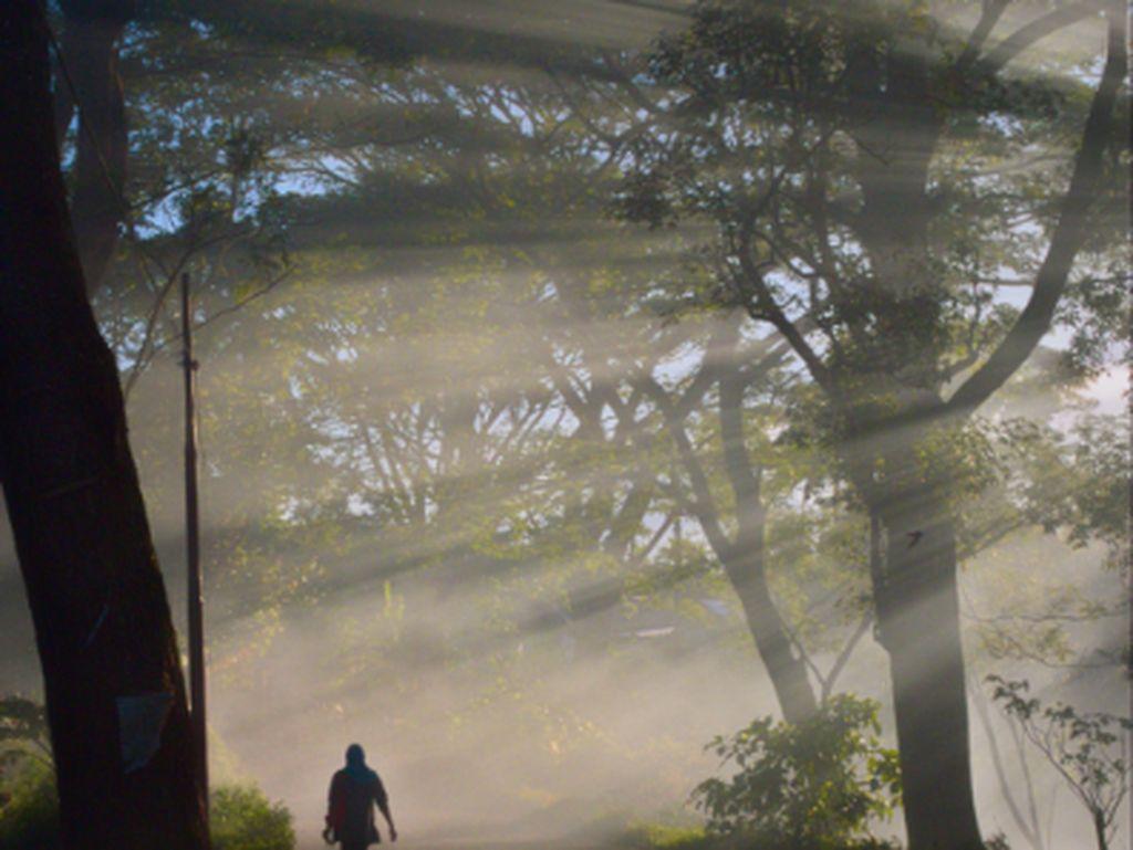 Dalam terang pagi-Mu