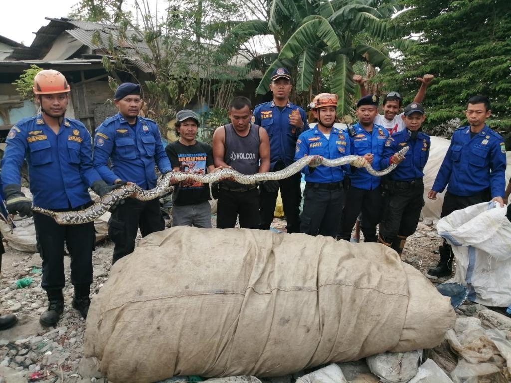 Damkar Bekasi Tangkap Ular Sanca 5 Meter di Lapak Pengepul