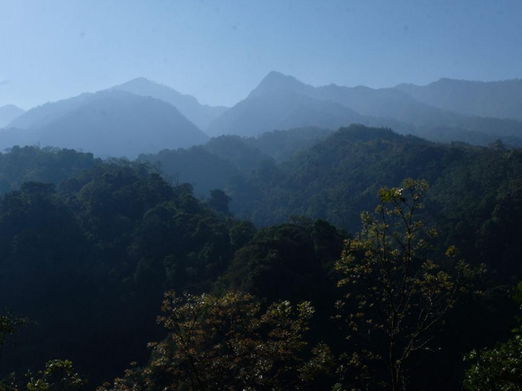 selamat pagi dari hutanku
