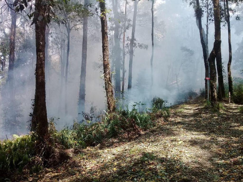 Ada Kebakaran, Pendakian Gunung Tambora Ditutup Sementara