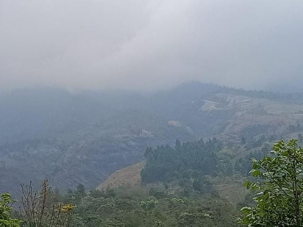 Dalam Sepekan, 843 Hektare Lahan Gunung Arjuno-Welirang Habis Terbakar