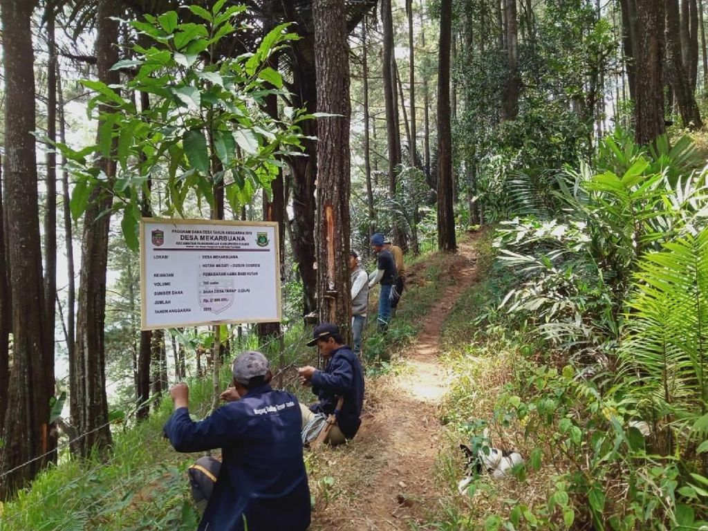 Babi Hutan Rusak Lahan di Ciamis, Warga Pasang 3 KM Pagar Berduri