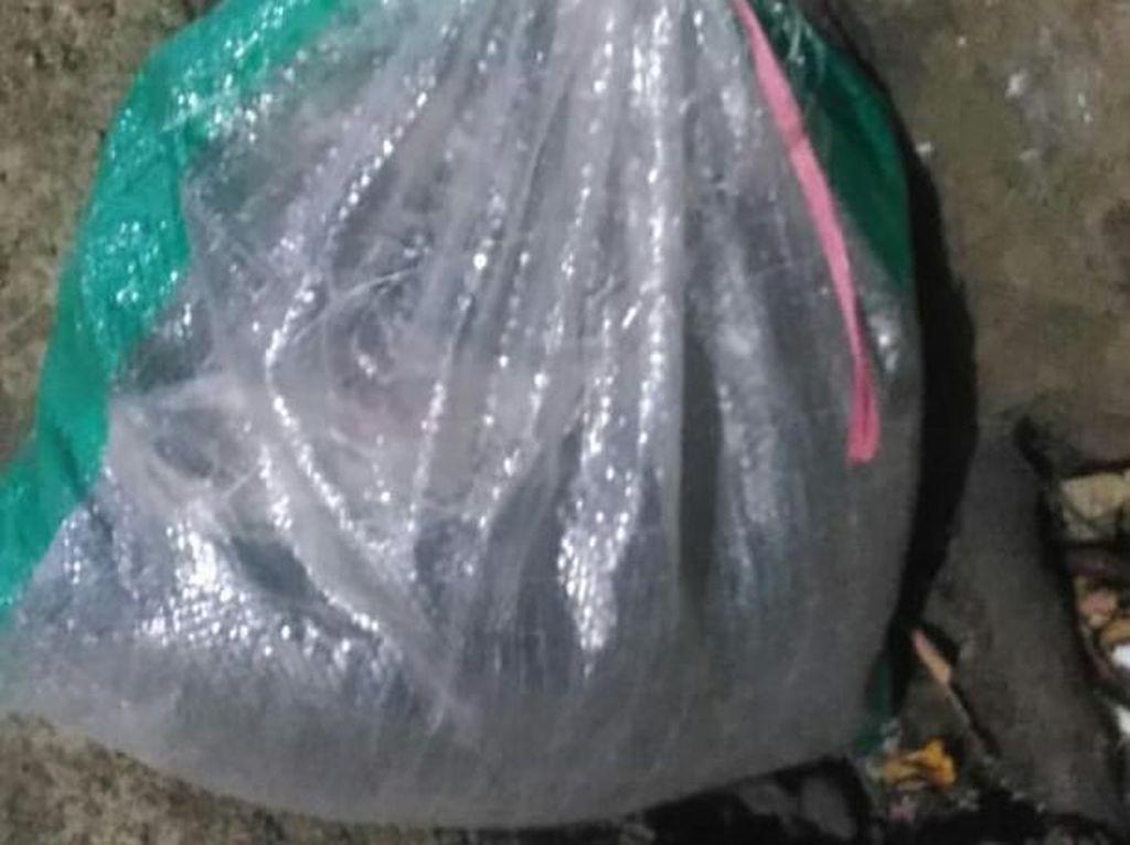 Polisi Bongkar Kuburan Kucing yang Viral Dicekoki Ciu