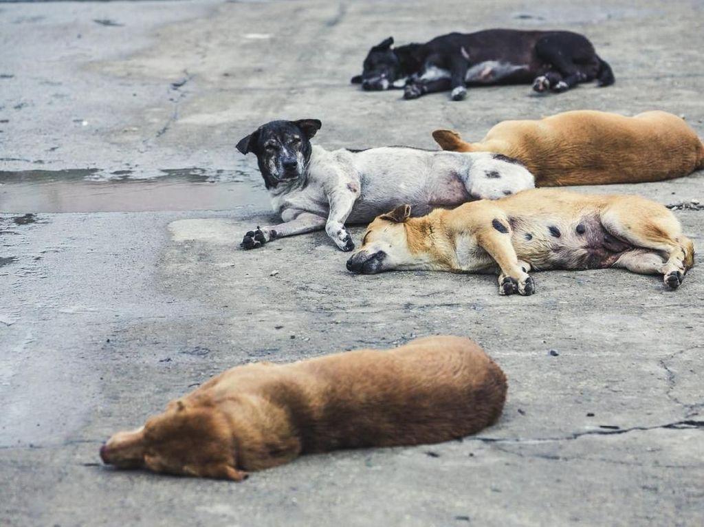 Serang dan Gigit 8 Warga, Anjing di Bandung Barat Positif Rabies