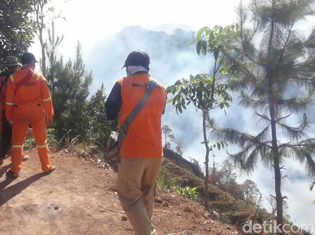 Hutan Alas Tengah Terbakar, Jalur Pendakian Gunung Argopuro Ditutup