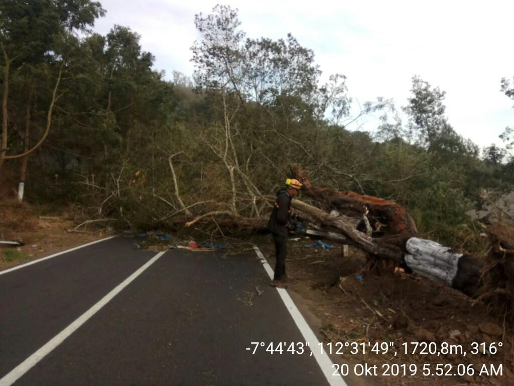 Angin Kencang Landa Malang Raya, Banyak Pohon Tumbang dan Baliho Roboh