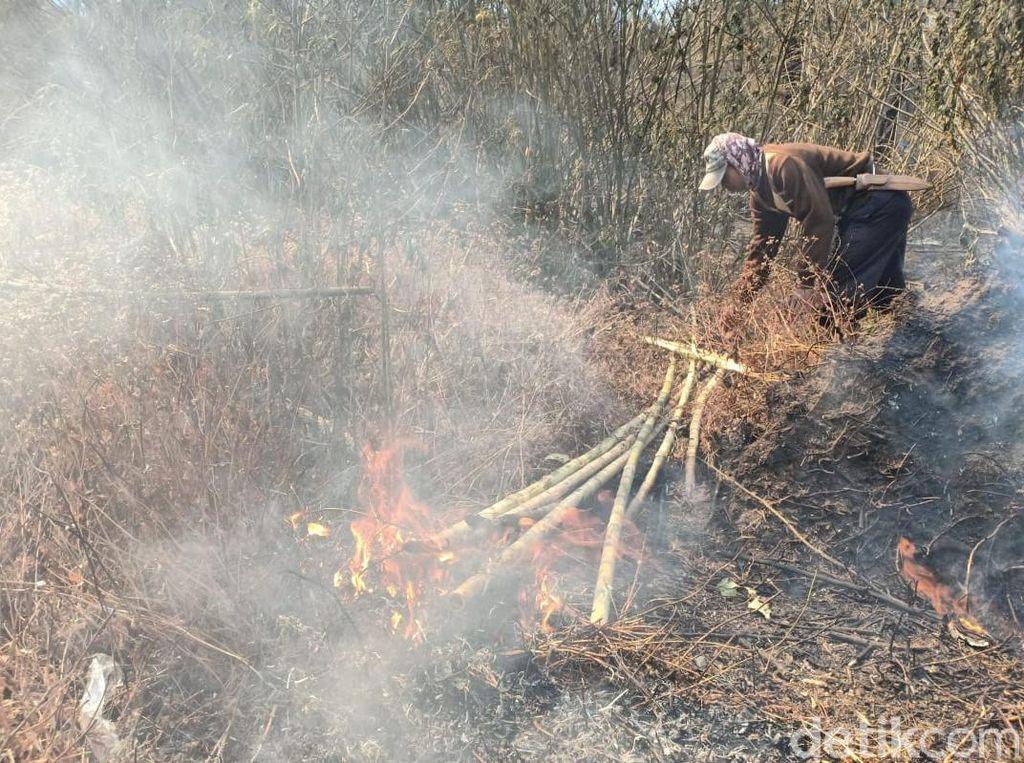 500 Hektare Lahan Tiga Gunung di Banyuwangi Habis Terbakar
