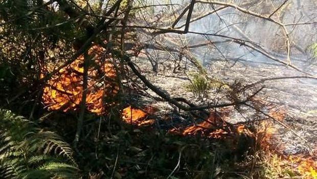 Area hutan di gunung wilayah Sulsel terbakar