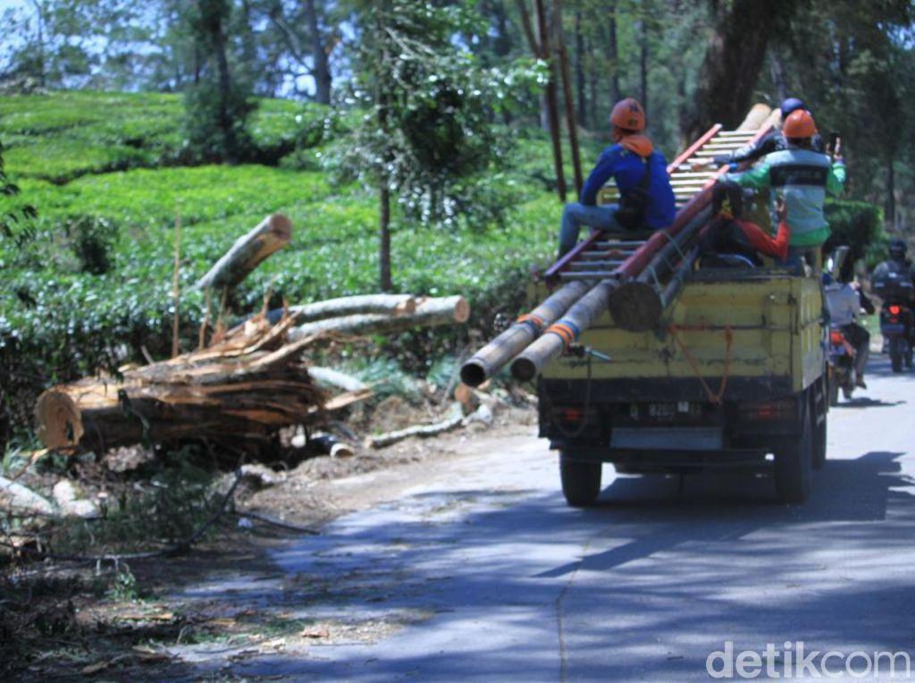 Sempat Tertutup Pohon Tumbang, Jalan Pangalengan-Kertasari Kembali Dibuka