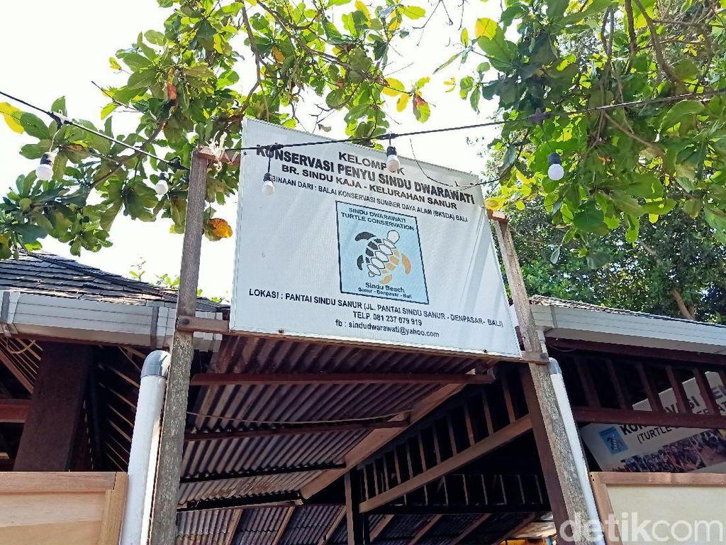 Heboh Bule Terekam CCTV Lompat Pagar Curi Puluhan Penyu di Sanur