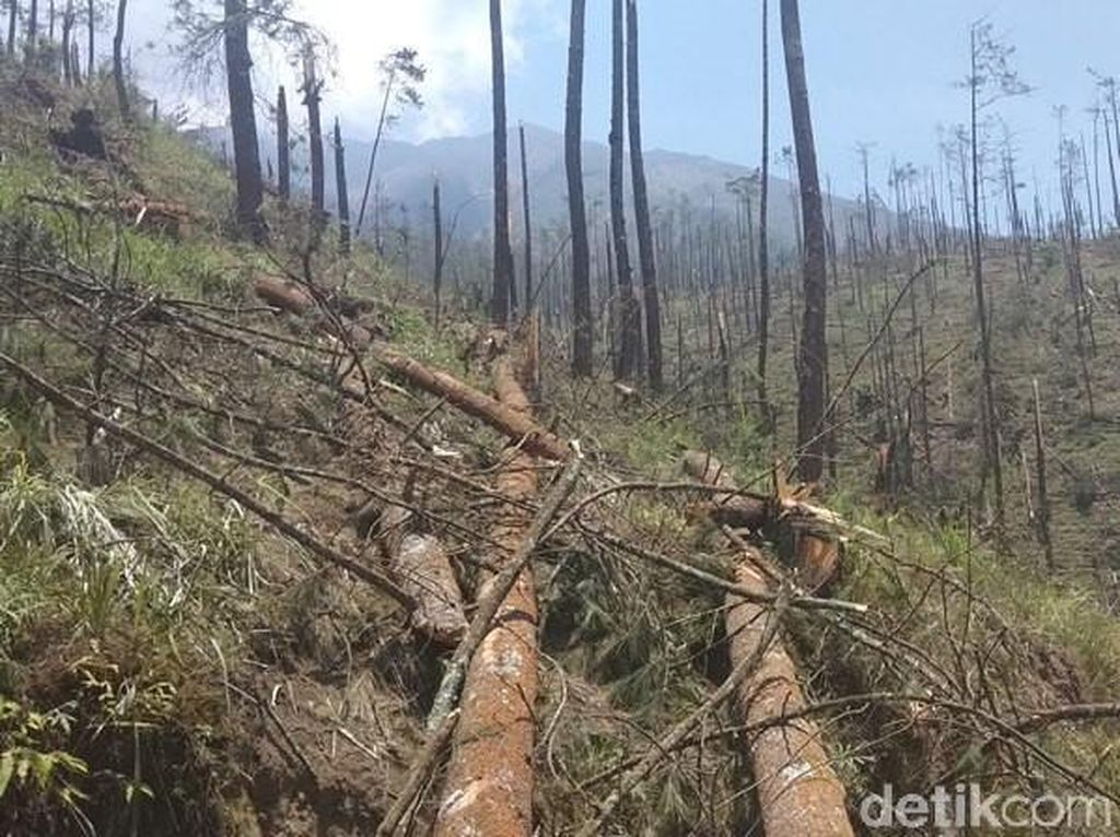 Hutan di Lereng Merbabu Nyaris Gundul Gegara Terjangan Angin Kencang