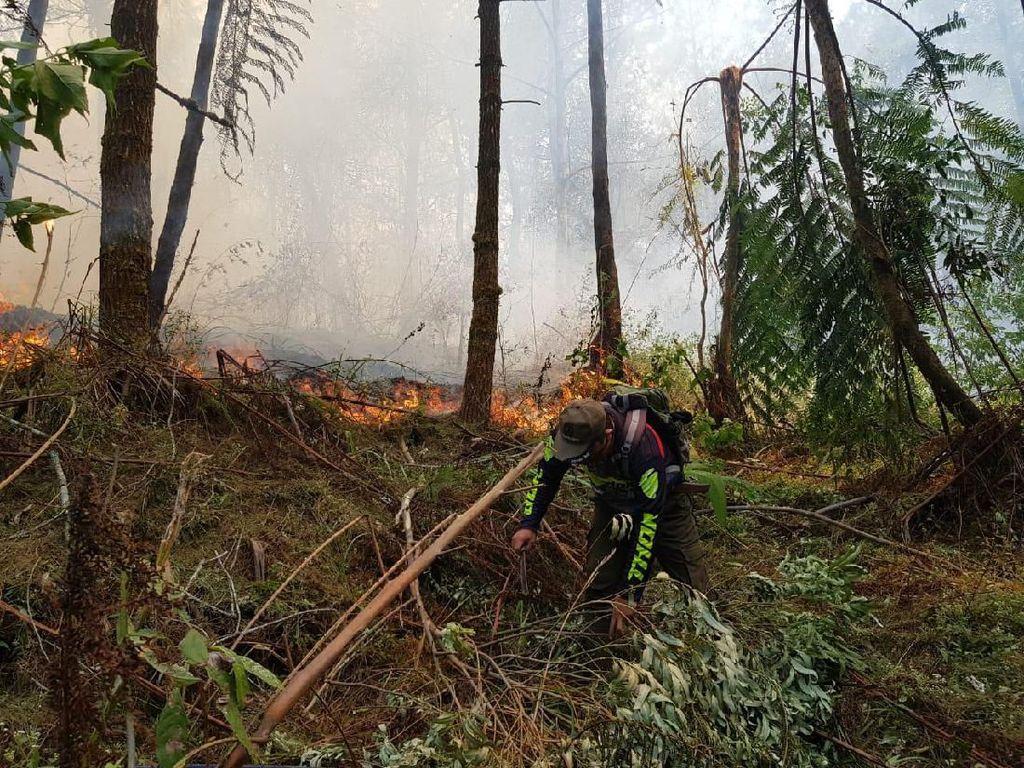 Kebakaran di Gunung Ciremai Ludeskan Lahan 50 Hektare