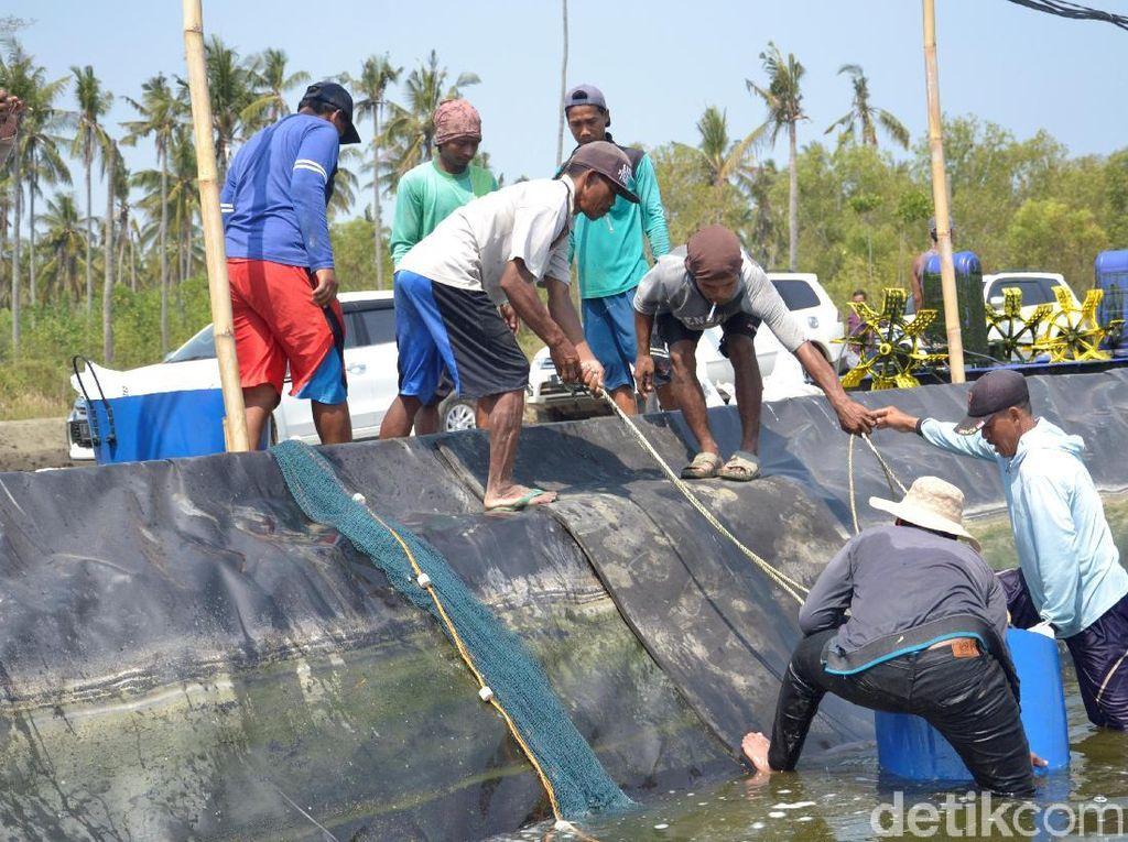 Tok! Harga Pakan Ikan Tak Naik di Tengah Pandemi COVID-19