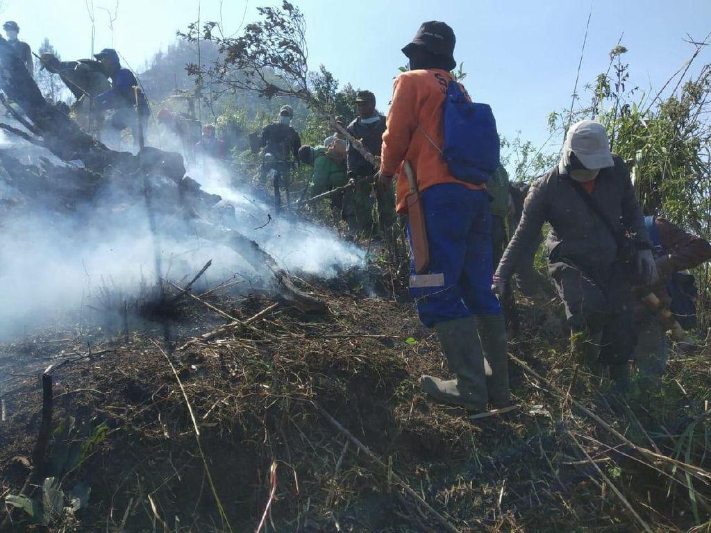 Kebakaran Hutan di Dieng Padam, 46 Hektare Lahan Hangus