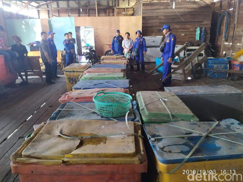 Polisi Gagalkan Penyelundupan 1.500 Ekor Belangkas di Riau