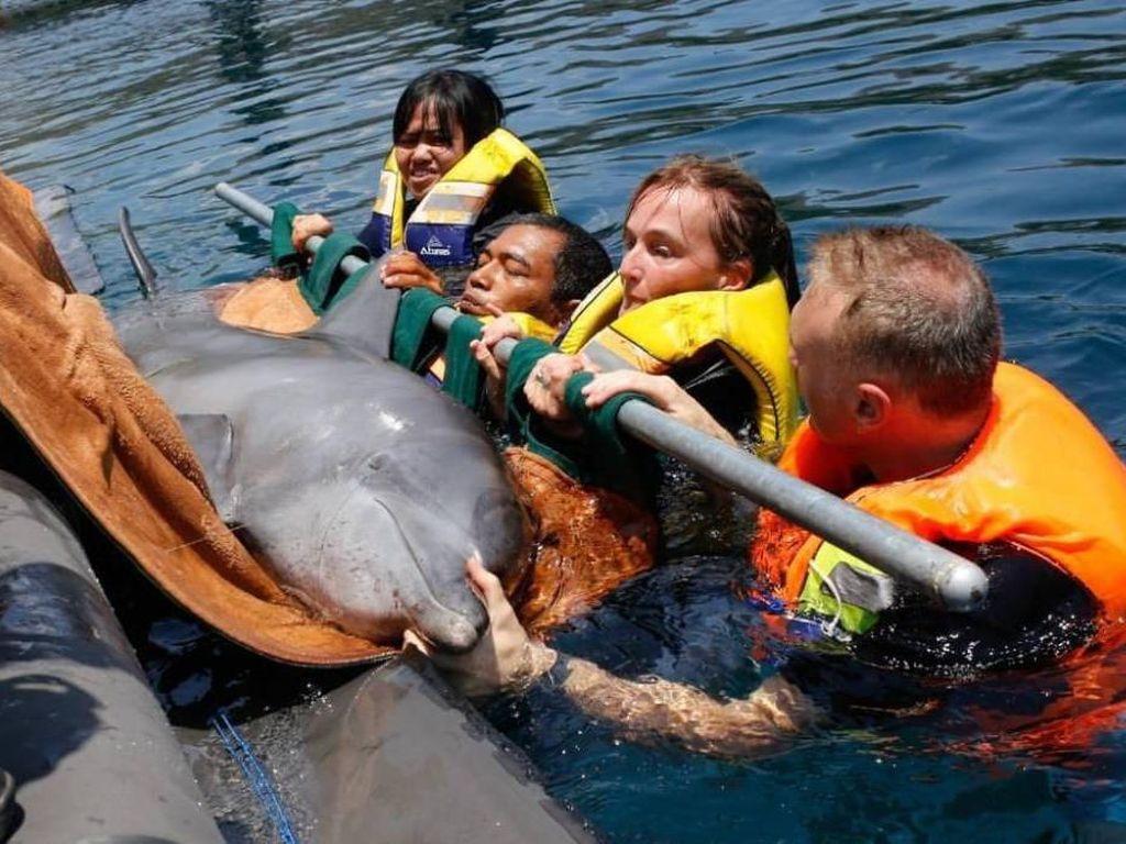 Foto: Menyelamatkan Lumba-lumba dari Hotel di Bali