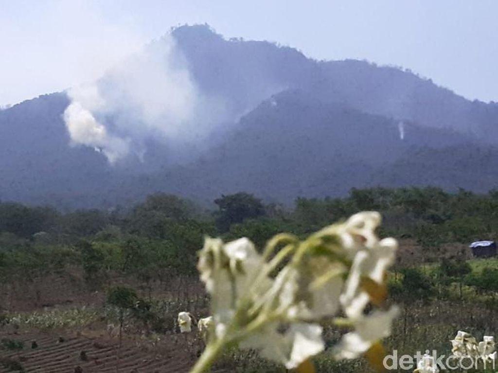 Kebakaran di Pegunungan Ijen Terbesar dalam Satu Dasawarsa Terakhir