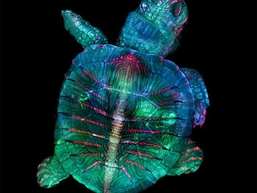 Foto Menakjubkan Pemenang Kontes Dunia Mikroskopis