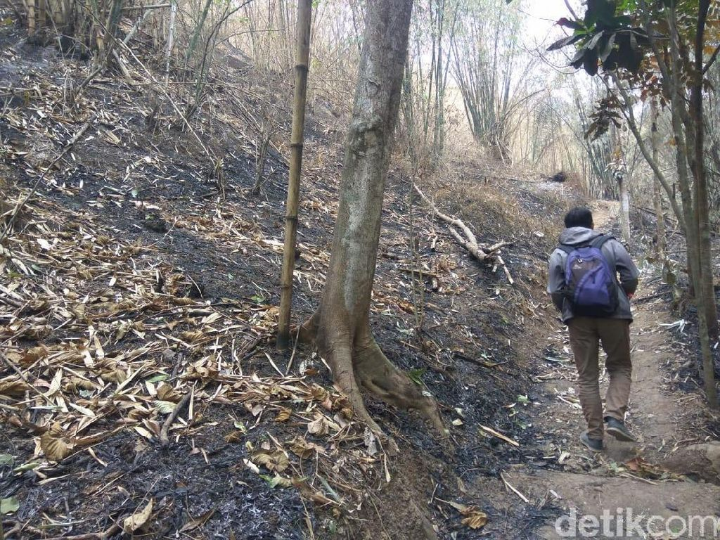 Pepohonan di Jalur Pendakian Puncak Salam Cireundeu Terbakar