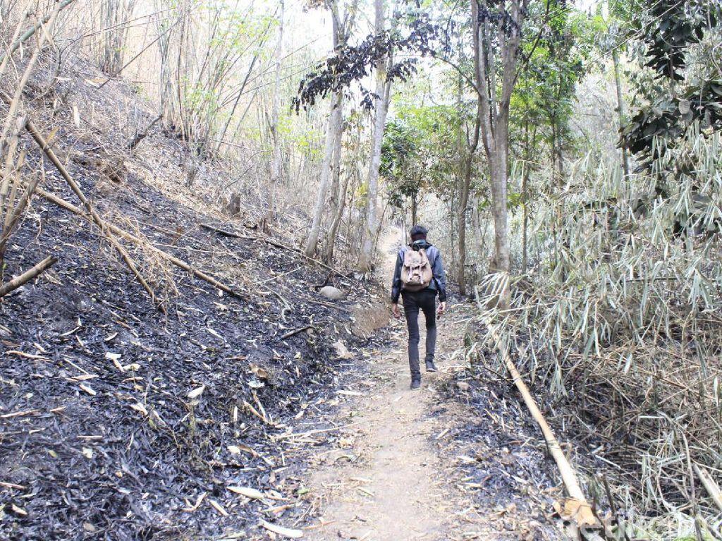 Kisah Hutan Larangan di Cimahi, Orang Tak Bisa Sembarang Masuk