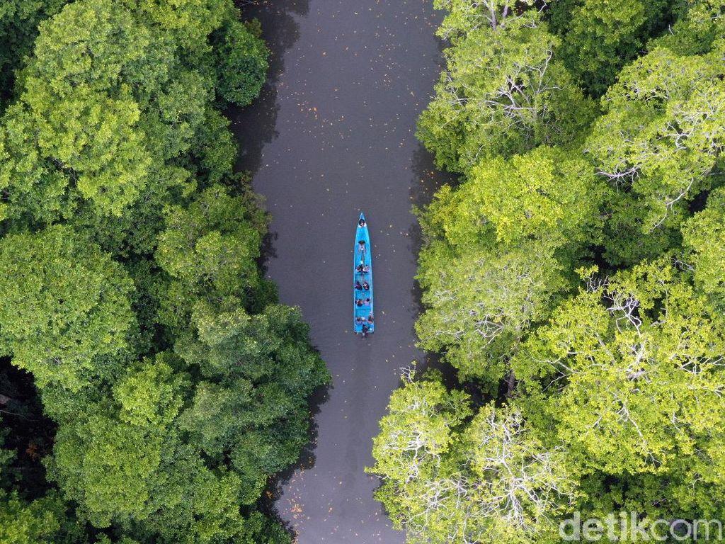 Serunya Menyusuri Hutan Bakau Rumadian Maluku Tenggara