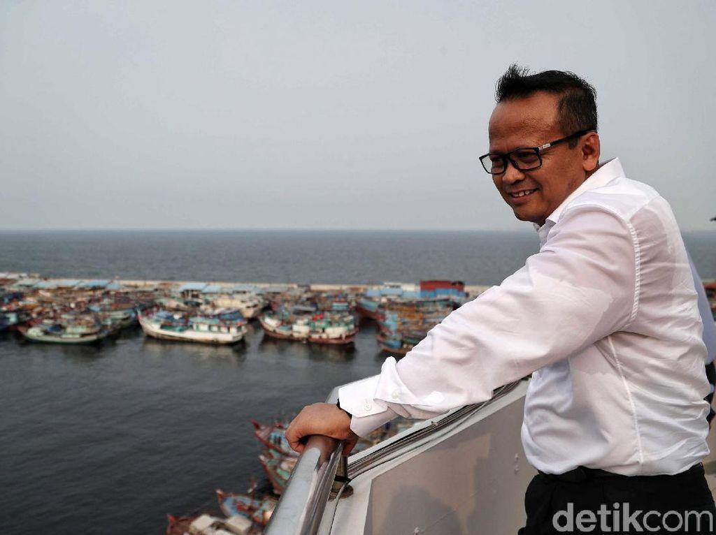 Revisi Aturan Susi Soal Benih Lobster Tunggu Restu Jokowi
