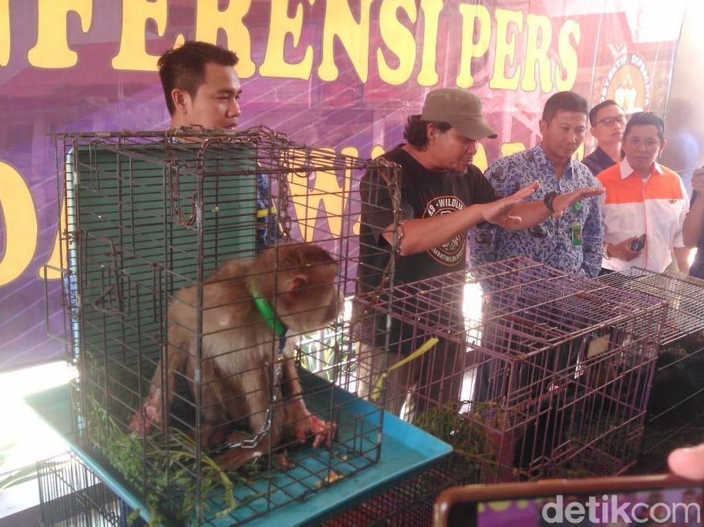 Polda Jabar Tangkap Penjual Hewan Langka via Medsos