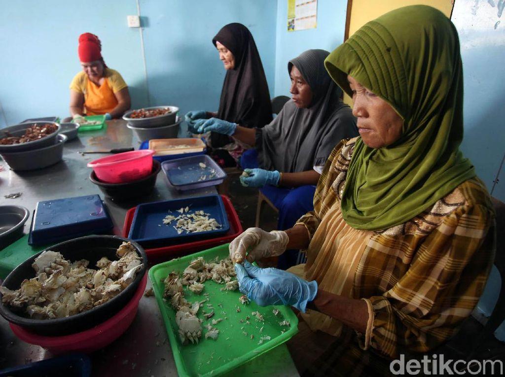 Geliat Usaha Pengolahan Kepiting Rajungan di Natuna